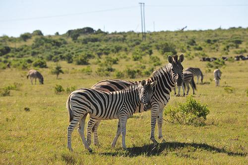 Suedafrika 2ter gamedrive in Kanega, qnibert00 by Flickr