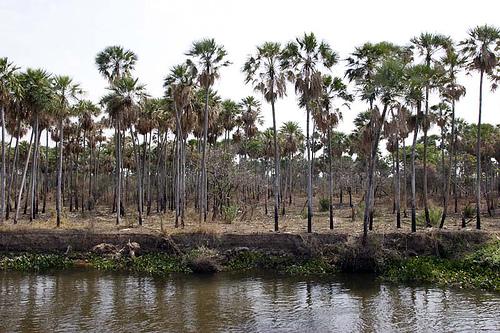 El Rio Paraguay von globevision be Flickr.com