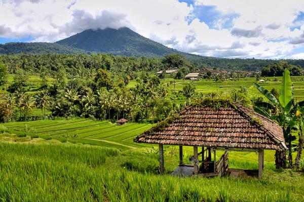 Bali cc Flickt /Pondspider