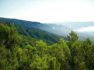 La Palma cc Edu martinez / Flickr