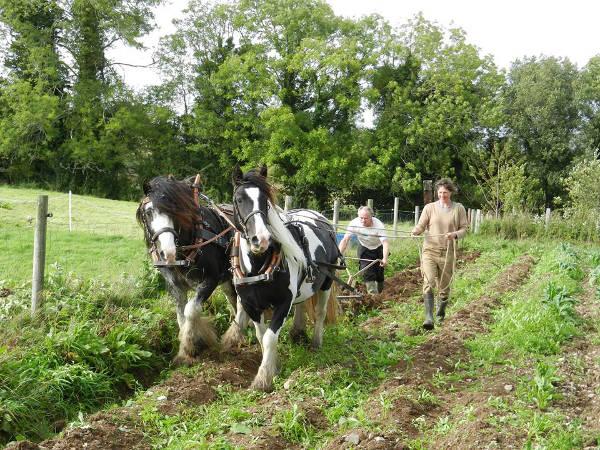 Arbeiten auf der Farm
