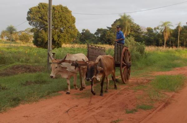 Ochsenkarren in Paraguay  cc http://parakay.blogspot.de/